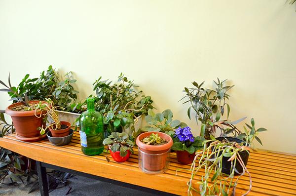 Radyo Atölyesi onlara bitkiye ev sahipliği yapıyor. (Fotoğraflar: Alican Özer)