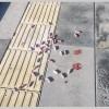 Ankara'da köpek katliamı sürüyor: 7 köpek öldürüldü