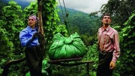 'Çay üreticisi özel sektörün kölesi olacak'