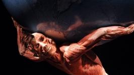 İnsan vücudunu keşfe hazır mısınız?