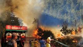 Ankara Nallıhan'da orman yangını sürüyor
