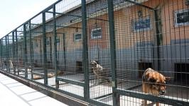 """Ankara Büyükşehir Belediyesinde öncelik """"insan sağlığı, hayvan refahı"""""""