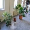 İLEF'te onlarca tür bitki yaşıyor
