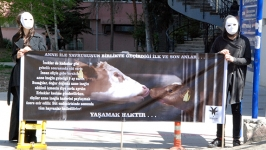 Ankara Vegan Platformu Cebeci'de eylem yaptı